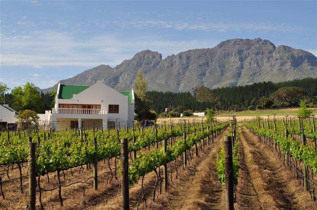 resized_2. Cape Winelands - Dewi Jackson