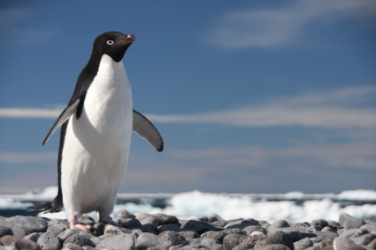 an introduction to the mysterious life of penguins Light on life is an exposition of methods for the popular audience a pop-encyclopedia if you will the book is full of essential information, professionally presented and easy to consult.