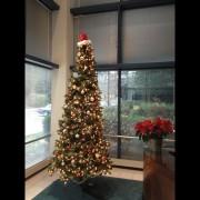 The Cary, NC lobby tree