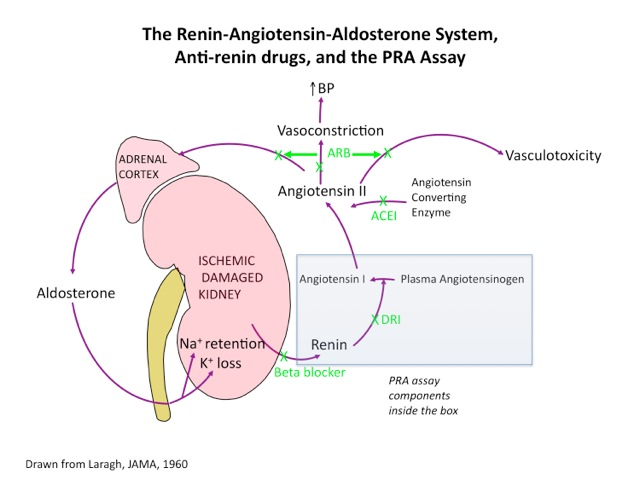 aldosterone and renin relationship quiz