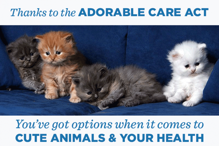 Everybody loves cute animals. Source: Adorable Care Act Tumblr.