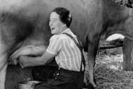 1260px-Hand_milking_a_cow