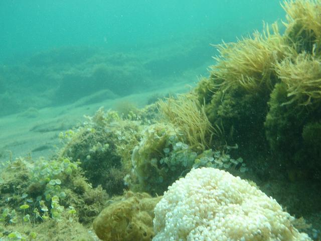 Sea sponges, by dimsis. CC-BY-SA-2.0 via Flickr.