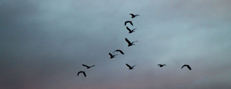 1260-migrating-birds