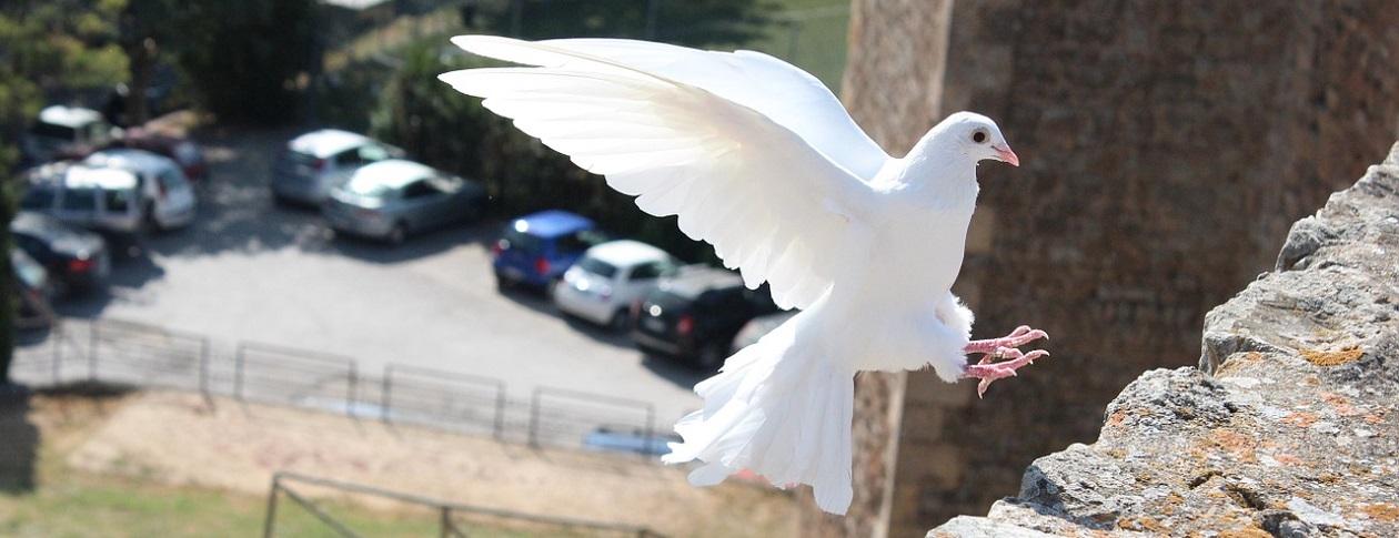 1260-bird-465816_1280