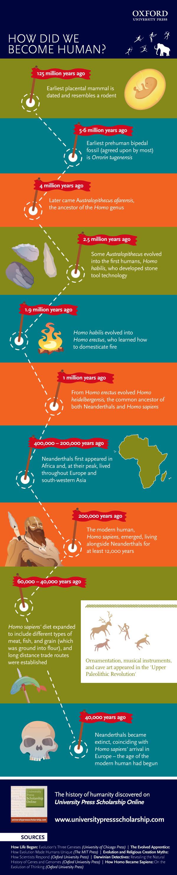 human evolution infographic