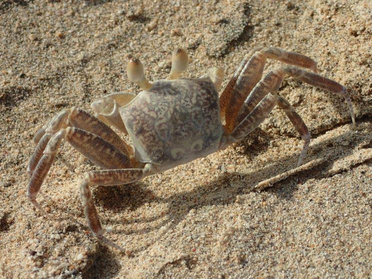 A classic crawler.