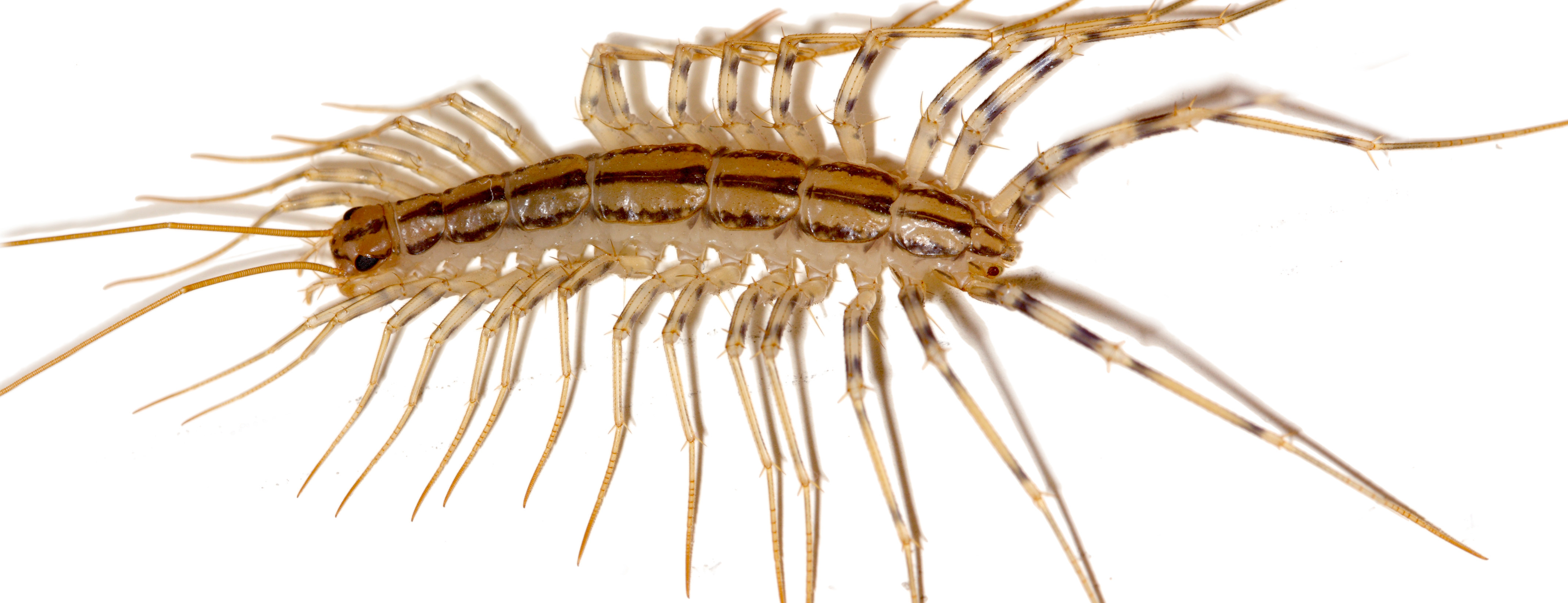 What are those terrifying centipede-like things? | OUPblog