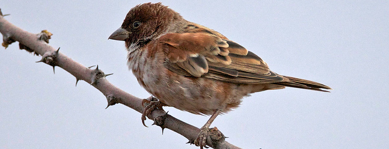 The unfinished fable of the sparrows | OUPblog