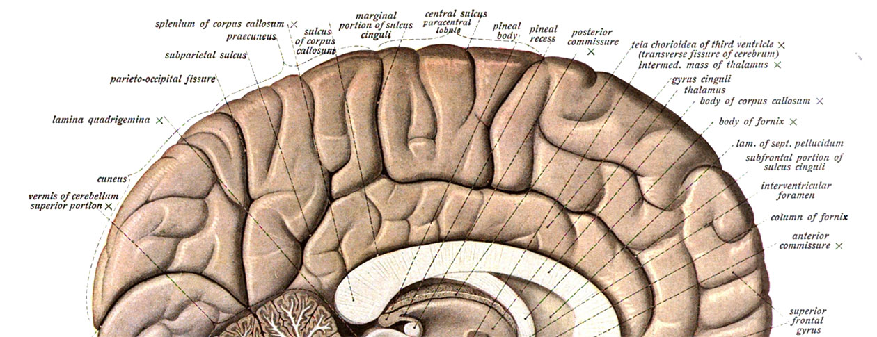 Test your knowledge of neuroanatomical terminology | OUPblog