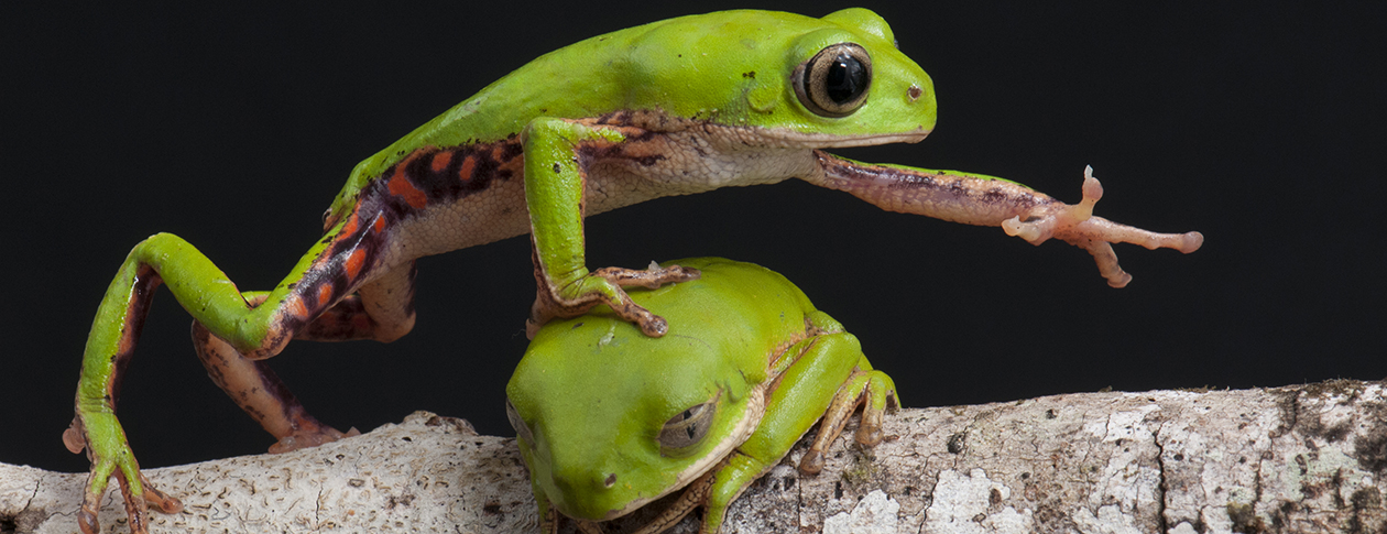 The science behind the frog life cycle [interactive guide] | OUPblog