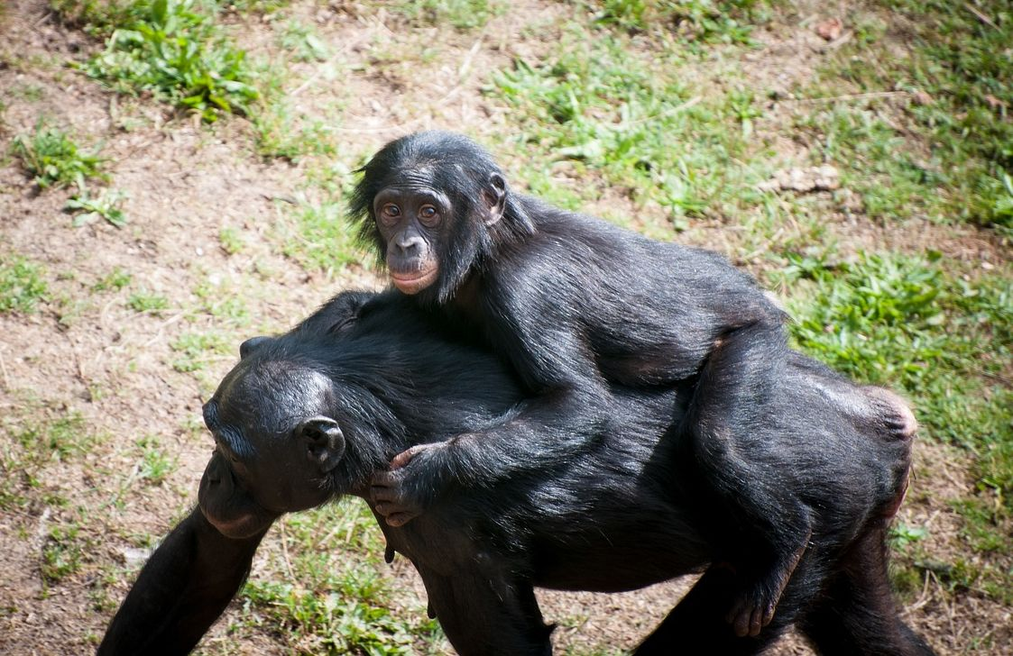 Dynasties: chimpanzees and their community
