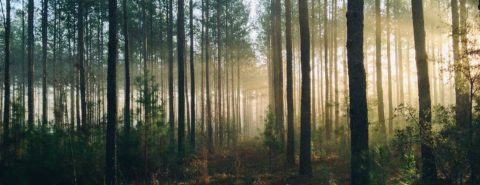 Missing the forest for the trees: interpreting the composer's message