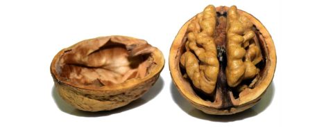 Can what we eat have an effect on the brain?